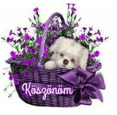 Good Morning, Dogs, Animals, Tulips, Thursday, Nice Asses, Buen Dia, Animales, Bonjour