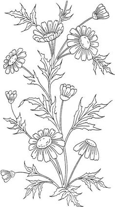 Coloring pages for adults!