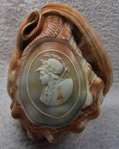 """ღღ """"Athena""""-Material: Cornelian Shell.   Size: approx. 5 6/8"""" by 4 1/2"""".   Date and Origin: Circa 1850/1860 Italy."""