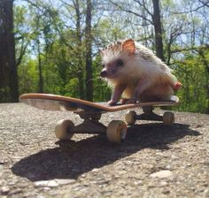 skateboard hedgehog