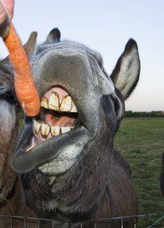 Ugly Donkey Cartoon
