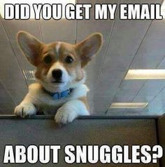 August 5th is Work Like A Dog Day! Or, snuggle like a dog day?