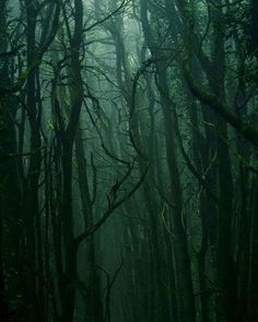 Image about aesthetic in aes/ slytherin by ShadowsOfDarkness Dark Green Aesthetic, Nature Aesthetic, Aesthetic Images, Fuerza Natural, Slytherin Aesthetic, Slytherin Pride, Hogwarts Houses, Dark Forest, Magic Forest