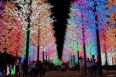 #Amazing #Christmas #Lights