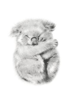 kevin the koala is an archival giclee art print of an original pencil drawing done by myself. This listing is for a 5.8 x 8.3 inch (A5) giclee print on gorgeous heavyweight archival matte paper.  This illustration is also available in A4, A3, A2 (420 x 594mm) or A1 (594 x 841 mm) A2 $110 (plus shipping) A1 $180 (plus shipping). Please contact me so that I can set up a custom order if you would like A2 or A1. All prints are signed on the back and printed with a small white border perfect for…