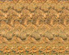 Leo Stereogram by 3Dimka on DeviantArt - Lion