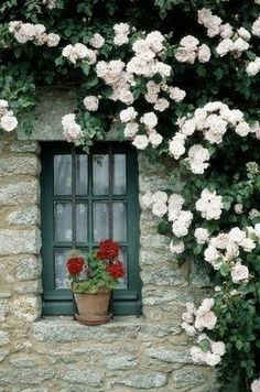 geraniums at the window and a rambling rose ,just beautiful.red geraniums at the window and a rambling rose ,just beautiful. Beautiful Gardens, Beautiful Flowers, Beautiful Pictures, Through The Window, Climbing Roses, Jolie Photo, Window Boxes, Window Sill, Dream Garden