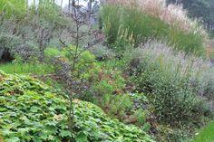 Kompozycja roślin w ogrodzie przydomowym projektu autorstwa: PracowniaOkaz