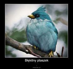 :)  Miluszaki.pl