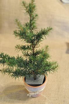 turn a twig into a mini Christmas tree...smart idea. I bet I could use our trees out back and make a few of these to decorate the bathrooms and kitchen :)
