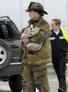 60 Best Dog Car Safety images in 2019 | Car seats for dogs, Dog car