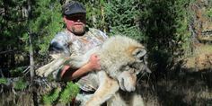 "OUTRAGEOUS!  DEMAND ARREST & PROSECUTION OF THIS UNEVOLVED SAVAGE! Stan Castagno, (registered as a Wyoming Outfitters Guide), lured a female wolf out of the protection & sanctuary of Yellowstone Park with a recording of a wolf pup in distress, then shot & killed her. Poaching from a sanctuary is APPALLING-& the fact that he is a ""guide"" makes his actions even more REPREHENSIBLE. Arrest Stan Castagno for poaching violations! PLZ Sign & Share Widely!"