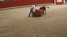Xuntanza de peñas taurinas de Pontevedra 2014 Horses, Animals, Animaux, Horse, Animal, Animales, Animais