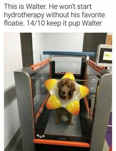 50+ Funny Animal Pics That Will Bring Happiness to Your Week