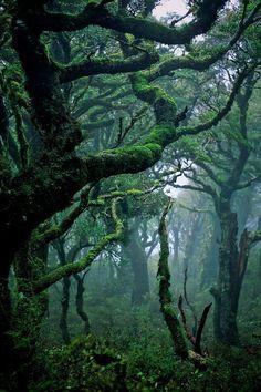 A rainforest in Waikaremoana, New Zealand @ Kamikaze Blue Jay