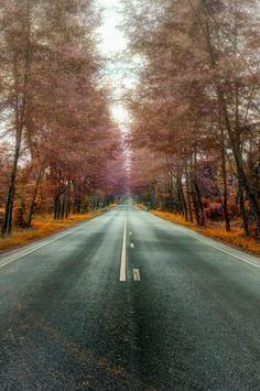 autumn highway (by Keris Tuah)