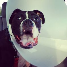 D'Argo with cone of shame