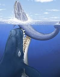 кит - Поиск в Google