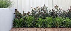 Golden Bay - LD TOTAL | Backyard | Garden Design | Landscape Design | Line | Screening | Fences | Decking | Outdoor Living | Garden Layers