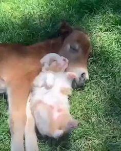 Cute Little Animals, Cute Funny Animals, Mundo Animal, My Animal, Fluffy Cows, Cute Cows, Animal Antics, Cute Animal Videos, Tier Fotos