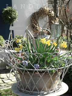 Time to spruce up your outdoor areas to welcome spring. Do it will spring bulbs and cold surviving annuals like pansies and violas.