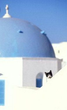 Greek Orthodox cat.  Oia, Santorini, Greece.