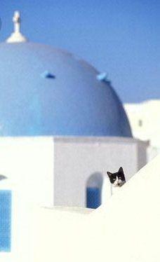 Greek Orthodox cat. Oia, Santorini, Greece.