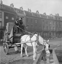 Ministry of Information Photo Division Photographer -- Horse-drawn delivery van of the London, Midland and Scottish railway halted in a sqaure in Bloomsbury during 1943 to allow the horse to get a drink. -- High quality art prints, canvases