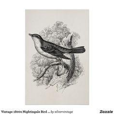 Vintage 1800s Nachtigall-Vogel-Illustrations-Vögel Poster