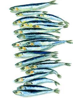 Illustration from book, Italian Food by Elizabeth David // The Folio Society (food art fish) Poster Art, Kunst Poster, Watercolor Fish, Watercolor Paintings, Watercolour, Food Illustrations, Illustration Art, Fish Design, Fish Art
