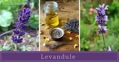 Symbol aromaterapie, zklidnění, hojení, vůně... Symbols, Glyphs, Icons