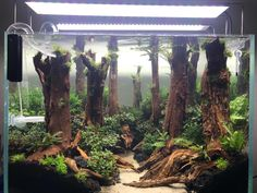 Looking for inspiration to get your fresh water aquascape or aquarium started? Or maybe just looking for some new ideas? Check out Bonsai Driftwood's gallery. Planted Aquarium, Freshwater Aquarium Plants, Aquarium Aquascape, Aquarium Setup, Betta Fish Tank, Aquarium Design, Aquarium Fish Tank, Freshwater Fish Tank, Colors