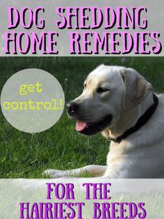 Dog shedding remedies that will help you get control over the pet hair in your home. Learn how to get rid of extra hair on your dog and in your house. Dog Shedding Remedies, Stop Dog Shedding, Best Pet Hair Vacuum, Dog Hair Removal, Pug Names, Pet Shed, Family Dogs, Dog Coats, Home Remedies
