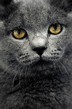 magicalnaturetour:    the cat by flavijus on Flickr.