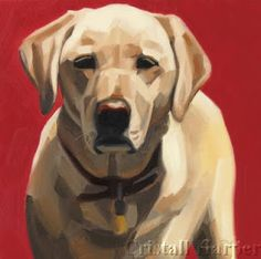 6 x original oil commission This is Aspen, a beautiful yellow lab that belonged to a kind family and passed away just after Chri. Labrador Retrievers, Animal Sketches, Animal Drawings, Golden Retriever Kunst, Dog Drawing Tutorial, Dog Artwork, Dog Illustration, Dog Portraits, Animal Paintings