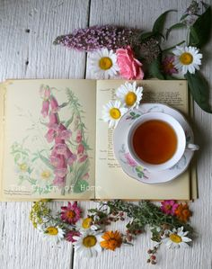 Stunning aerial shot -- June Visual Tea/Garden Journal at The Charm of Home