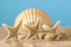 Resultado de imagen para caracoles de mar