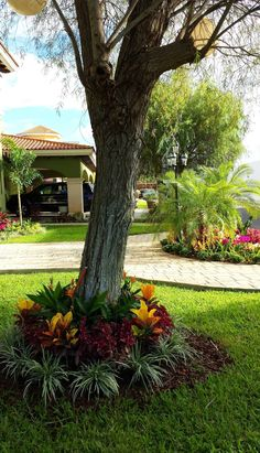 6 secretos para tener tu jardín bonito
