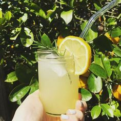Author: Lily Mazzarella MS, CNS organic Meyer lemons, zested and chopped (retain zest!) 1 piece of organic ginger, cup sweetener of choice (I used organic coconut c vinegar of choic. Lemon Lime, Lemon Grass, Grape Vodka, Shrub Drink, Couscous Healthy, Gourmet Recipes, Cooking Recipes, Organic Vodka, Cooking