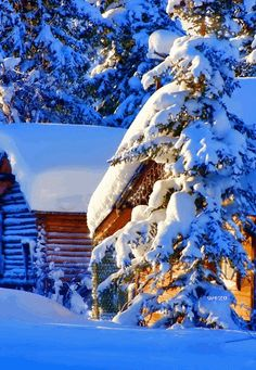 Winter and snow, this is Christmas time. Winter Images, Winter Photos, Snow Scenes, Winter Scenes, Sunset Photos, Nature Photos, Weather Snow, Sunflower Pictures, Picture Places
