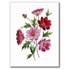 Beautiful Cosmos Flowers in Crewel Embroidery Post Cards from Zazzle.