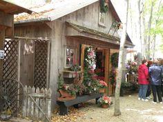 Christmas in the woods, Columbiana, Ohio | Nature | Pinterest | Ohio