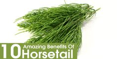 10 Amazing Benefits Of Horsetail For Skin, Hair And Health