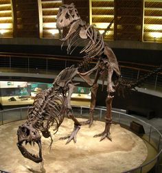 Accouplement d'un couple de T. rex, Jurassic Museum of Asturies. Dinosauria, Saurischia, Theropoda, Coelurosauria, Tyrannosauroidea, Tyrannosauridae (MUJA). Auteur : NeGRa, 2006.