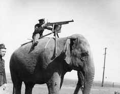 A soldier equips an elephant-mounted machine gun during WWI c.1914-1918