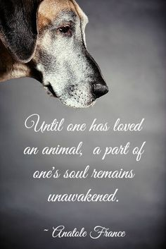 An animals love is unlike anything in the world.