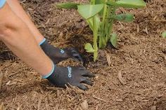 How to apply mulch