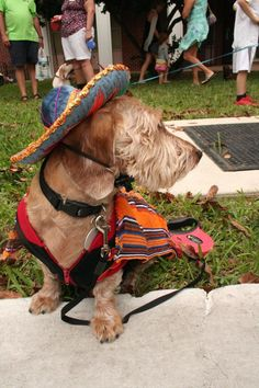 Little Dogs Make Big Splash In Annual Key West New Year's Parade | WLRN