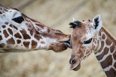 Best animal photos: Mother's day edition! - Slideshows and Picture Stories - TODAY.com