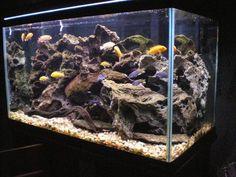 How to set up and aquascape a Cichlid habitat Aquarium Fish Aquarium, Cichlids, African cichlids Hello! Here we have best photo about cich. Cichlid Aquarium, Cichlid Fish, Aquarium Fish Tank, Fish Tanks, Diy Aquarium, Turtle Tank Setup, Fish Aquarium Decorations, Aquarium Maintenance, Aquarium Stand